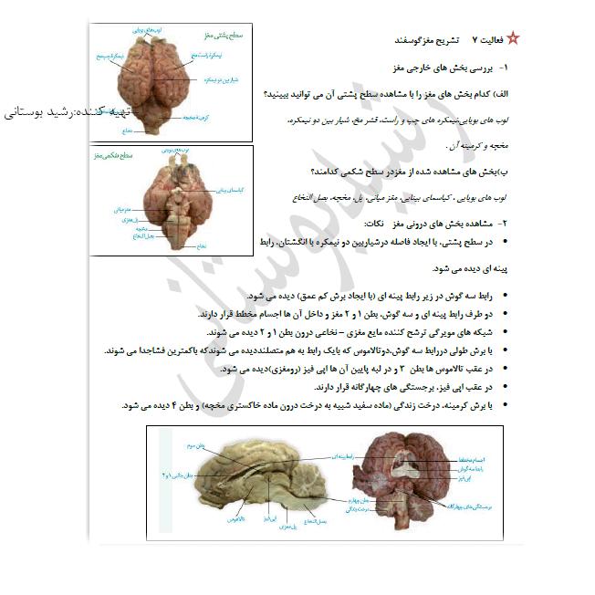 پاسخ فعالیت 7 فصل 1 زیست یازدهم